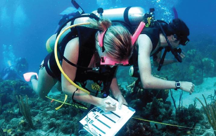 Marine Conservation Undergraduate Scholarship