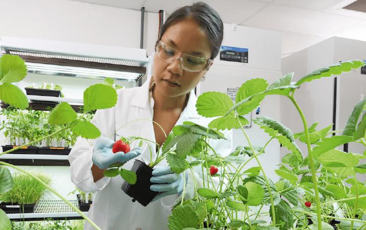 ICAR IARI Division of Vegetable Science DVS Junior Research Fellowship 2021